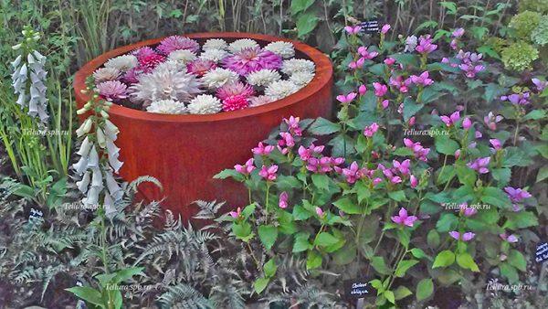 осенняя композиция с цветущей хелоне фото