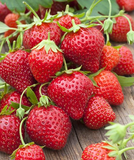 Земляника садовая Мара де Буа фото созревшитх ягод