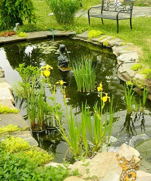Iris-pseudacorus в садовом дизайне фото