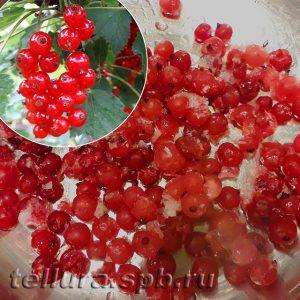 Замороженные ягоды красной смородины в домашних условиях фото