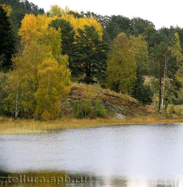 Осенняя окраска березы фото
