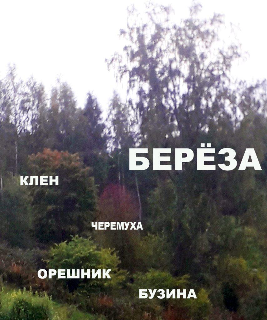 Сравнительные размеры деревьев фото