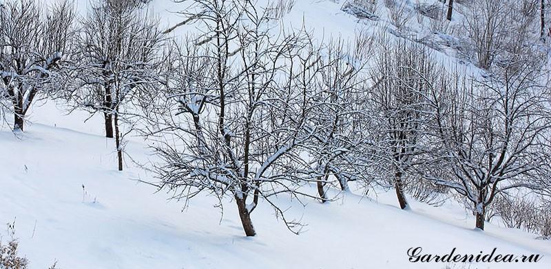 Зимние кроны деревьев и их обрезка