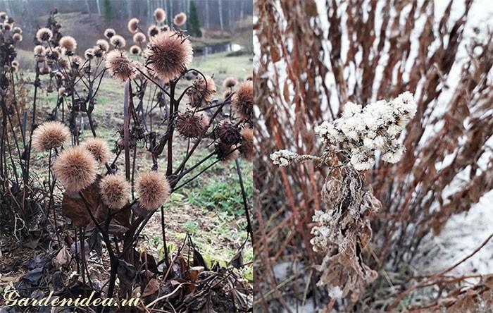 Декоративные многолетники, засоряющие семенами