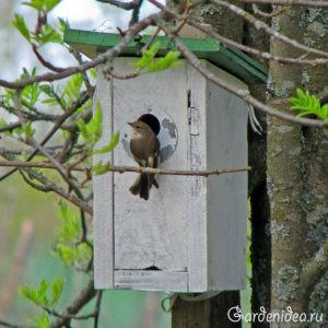 синичник и птицы, которые в нем живут