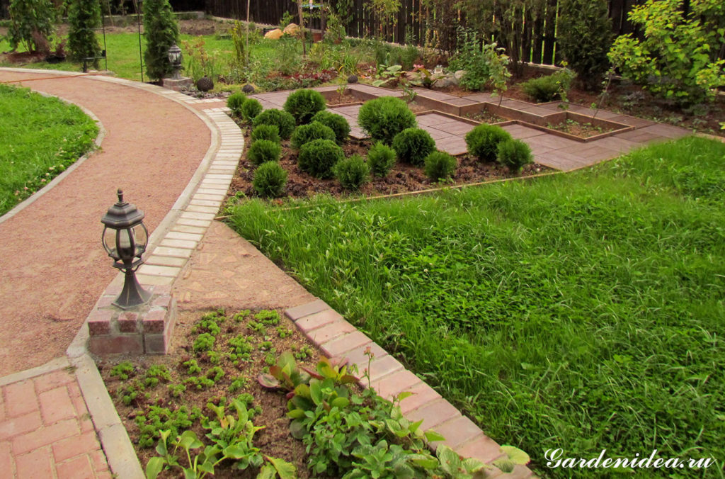 Декоративные посадки смородины с шаровидными туями на переднем плане (фото)