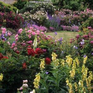 Коттеджный сад фото