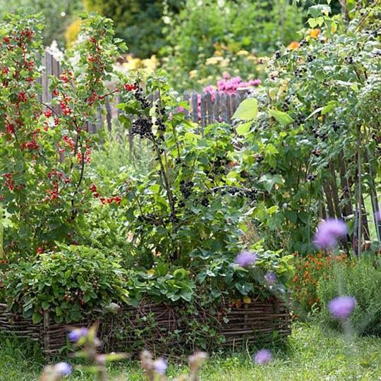 Посадка ягодных кустов в коттеджном саду