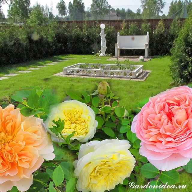 Укрытие роз на зиму как украшение сада