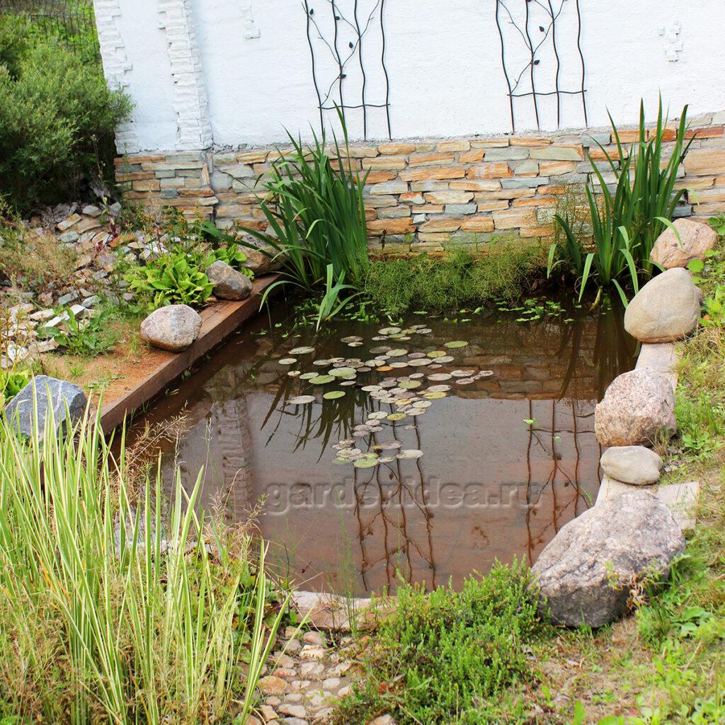 садовая клюква на участке у пруда