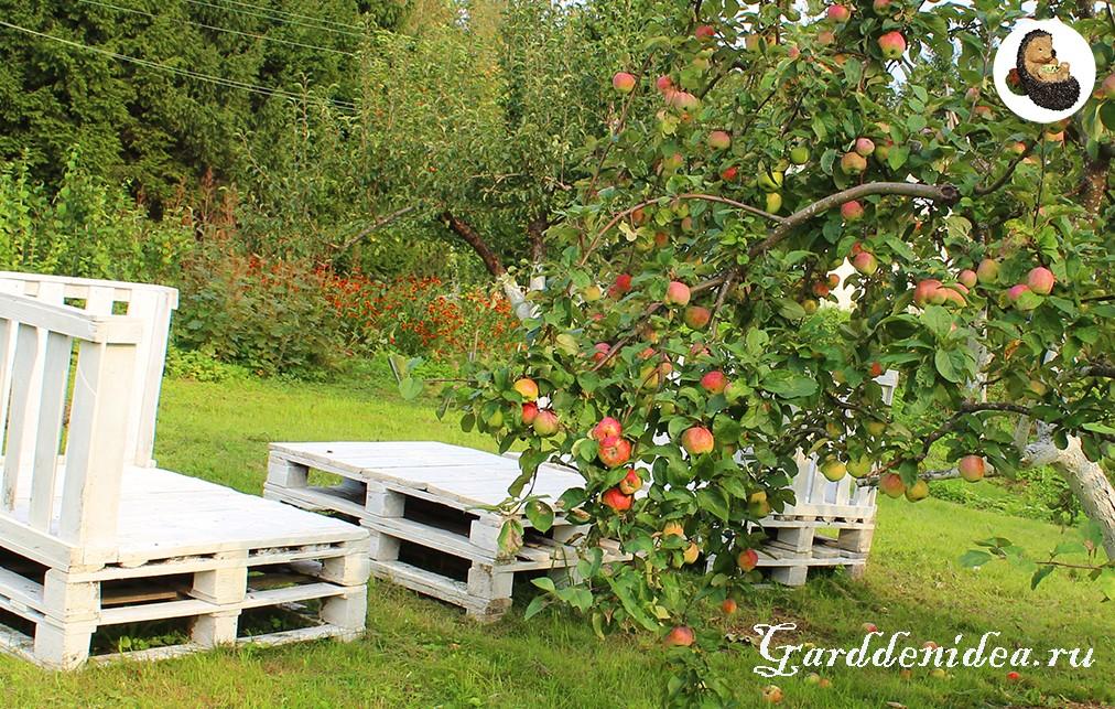 Многолетние цветы у яблони и груши
