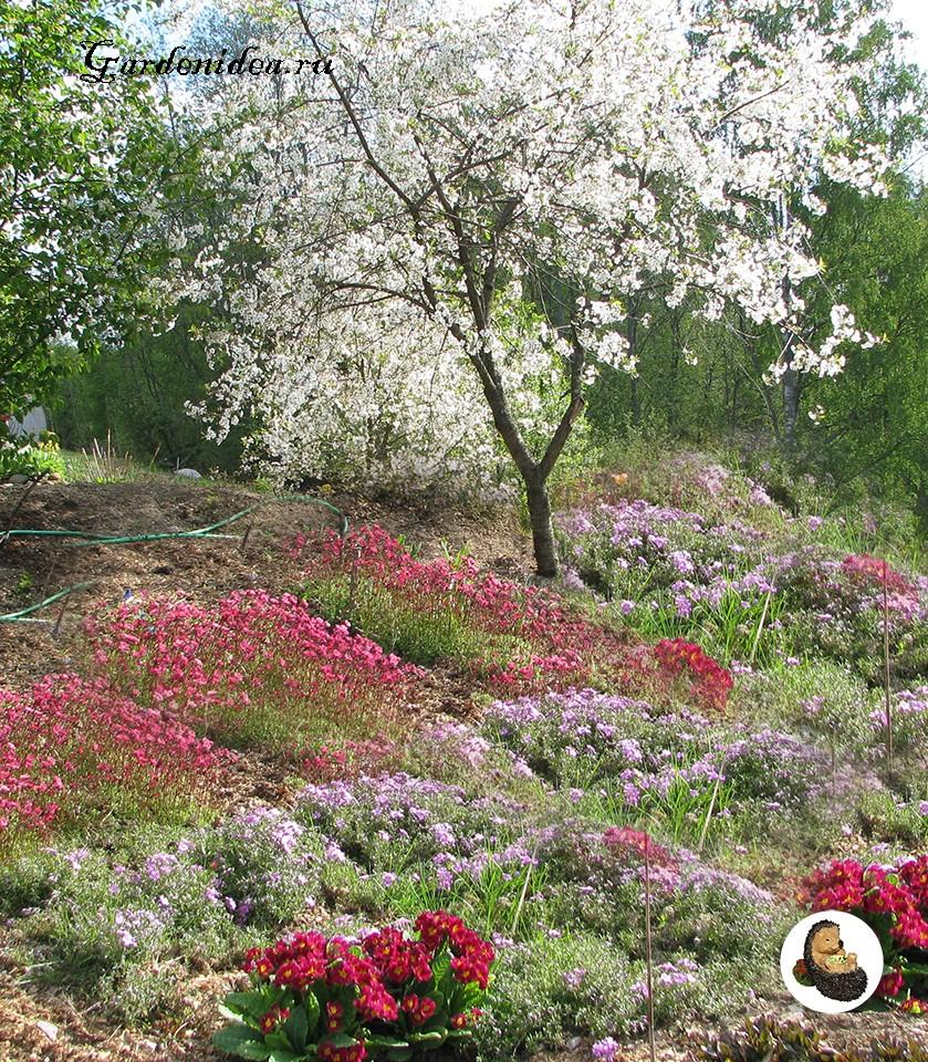 Цветы под плодовыми деревьями в саду