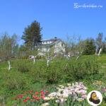 Как посадить красиво фрукторый сад и цветы у яблони