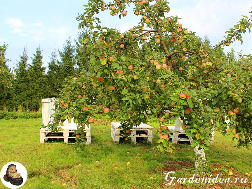 Газон во фруктовом саду